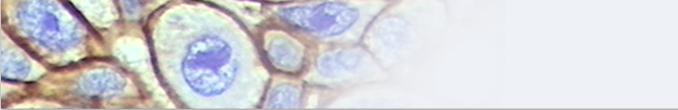 Imuno-Histoquímica (IHQ).
